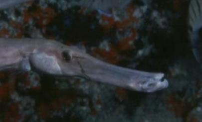 Bicho marino