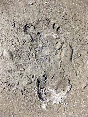 Huella_Bigfoot