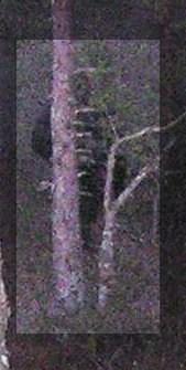 El fantasma del bosque