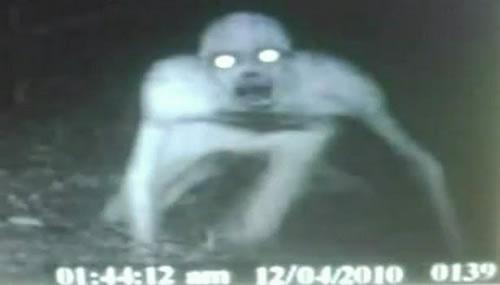 Extraña Criatura fotografiada en Lousiana  Monstruo-fotografiado-en-eeuu