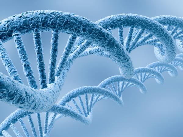 10 descubrimientos de la decada inteligencia colectiva for En 2003 se completo la secuenciacion del humano