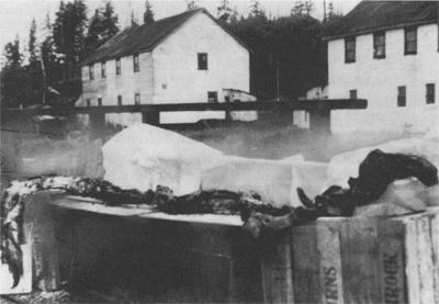 restos de extraño animal en costas de Alaska