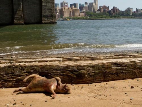Extraño animal descubierto en las playas de Brooklyn
