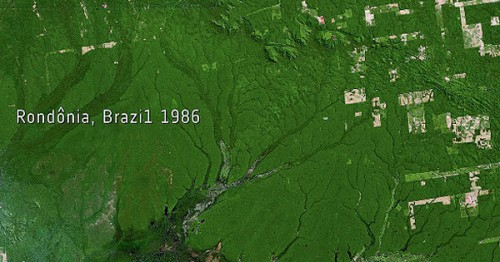 Selva del Amazonas en 1986