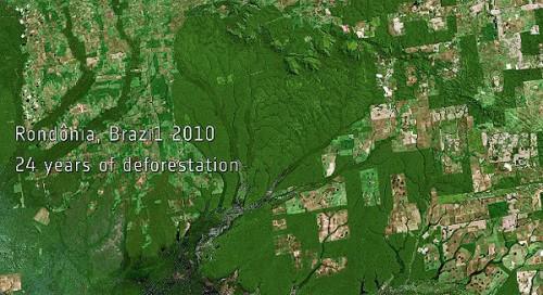 Selva del Amazonas en 2010