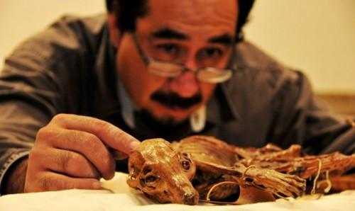 Hallan un perro momificado de mil años de antiguedad