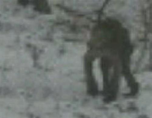Criatura misteriosa fotografiada en Pensilvania