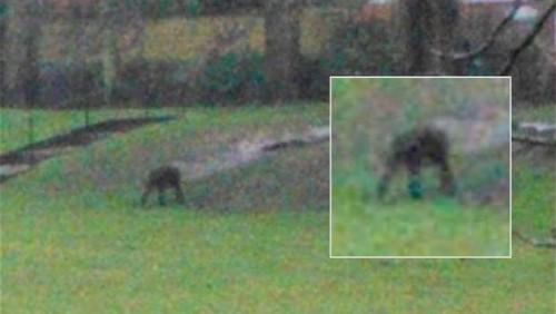 Misterisa criatura del Parque Dorchester