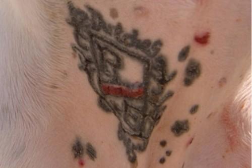 Perro tatuado abre una polemica discusión en Internet