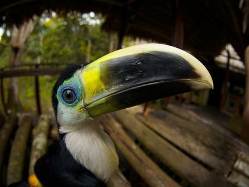 Reserva Natural Palmari, en el Amazonas