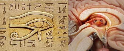 ojo de orus y glandula pineal