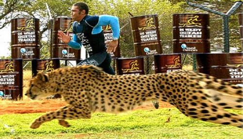 habana guepardo