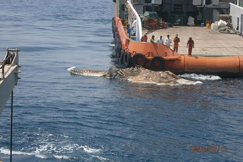 misteriosa criatura descubierta en el golfo Persico 02