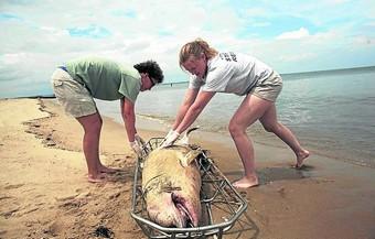 misteriosa muerte de delfines