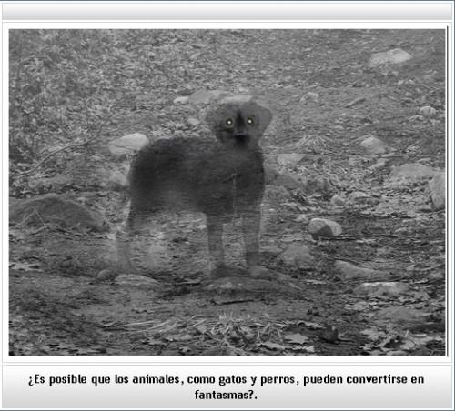 perro fantasmal