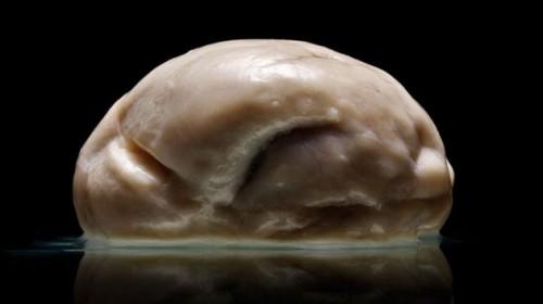 El cerebro más extraño y enigmático de la historia de la ciencia