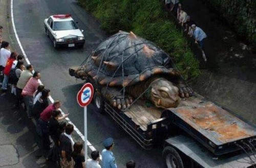 tortuga-gigante