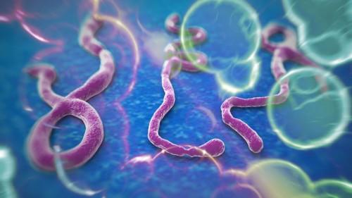 virus del ebola