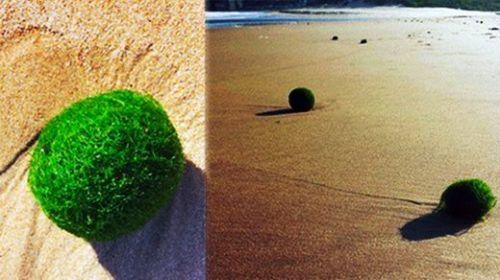 Misteriosos huevos verdes en una playa de australia