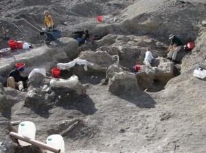 Descubrimiento del mayor dinosaurio