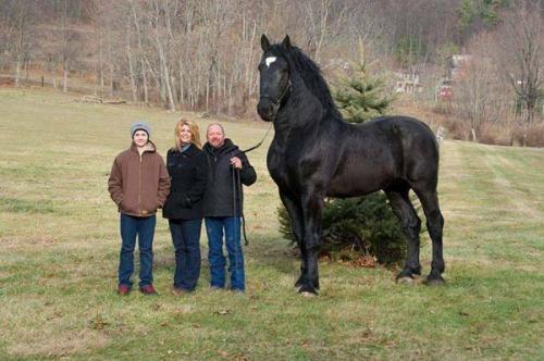 caballo más alto del mundo