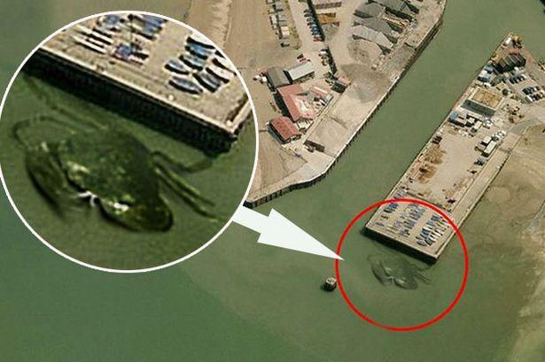 Cangrejo Gigante en una costa británica