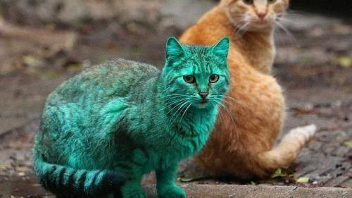 el misterio del gato verde