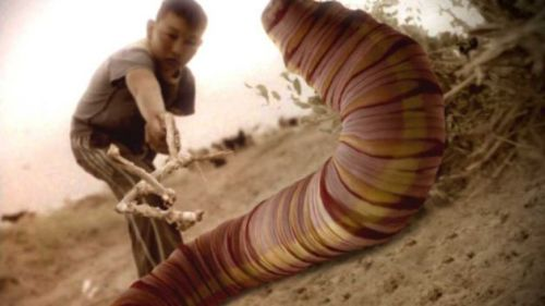 gusano gigante de gobi mongolia