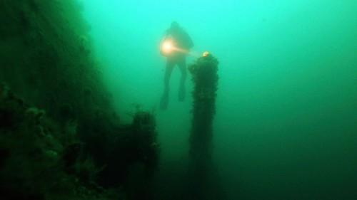 Bosque subacuatico milenario