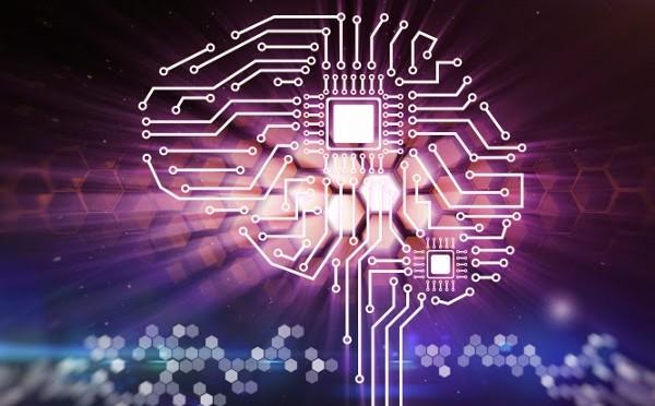 circuito cerebro