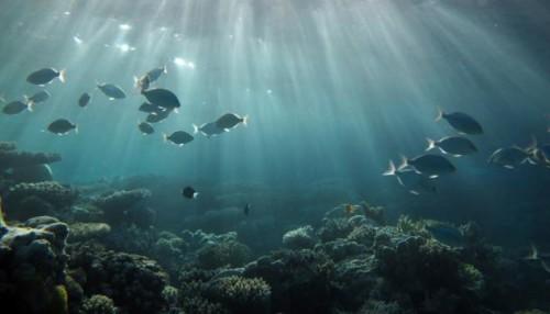 nuevo-estudio-revela-mas-datos-preocupantes-sobre-el-estado-de-nuesros-oceanos-1