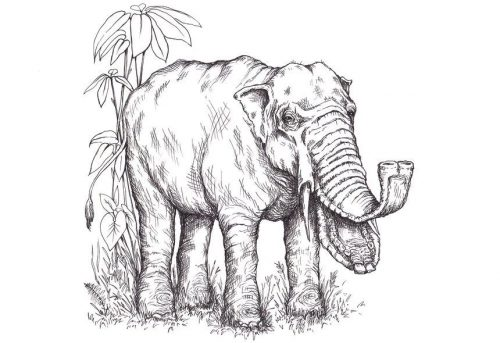 elefantes-perdidos